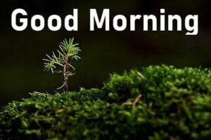 HD good morning pic for whatsapp status