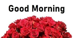roses good morning pic