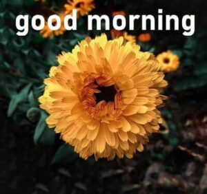 yellow flower good morning pic